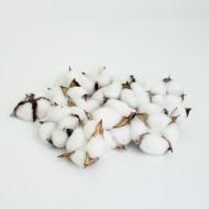 Cotton white 15pcs