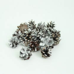 "Dried seedcones 20pcs, ""silver"""