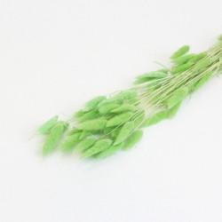 Dried lagurus 40g
